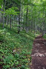 Wanderetappe Weissenstein über Nesselboden nach Oberdorf ( wir gingen die Etappe also abwärts )