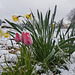 Snow, sun, rain, hail... all in one day ~ Climate change surprise ?