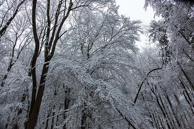 20150131 6755VRAw [D~SHG] Schnee, Wesergebirge, Rinteln