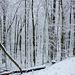 20150131 6756VRAw [D~SHG] Schnee, Wesergebirge, Rinteln