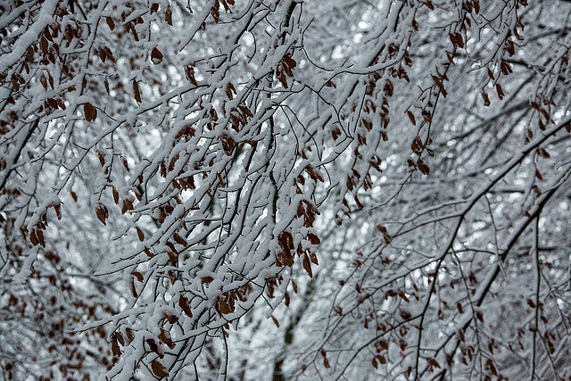 20150131 6757VRAw [D~SHG] Schnee, Wesergebirge, Rinteln