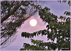 Evening Moon.