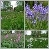 Nederland – Vorden, Kasteel Hackfort / Stinzenplanten