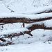 20150131 6758VRAw [D~SHG] Schnee, Wesergebirge, Rinteln