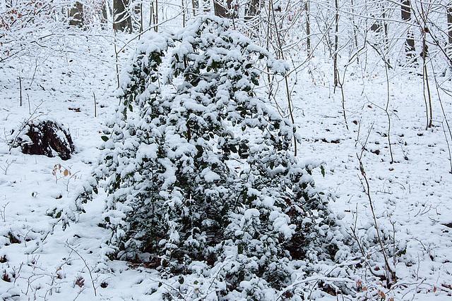 20150131 6759VRAw [D~SHG] Schnee, Wesergebirge, Rinteln