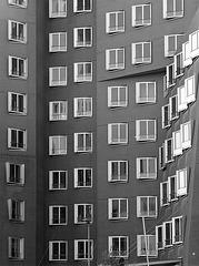 Windows to the yard