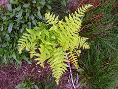Nature's arrangement