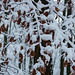 20150131 6760VRAw [D~SHG] Schnee, Wesergebirge, Rinteln