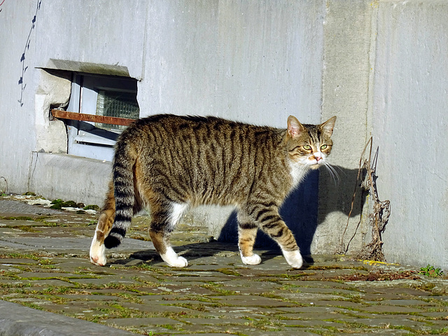 ''The  stationscat''2