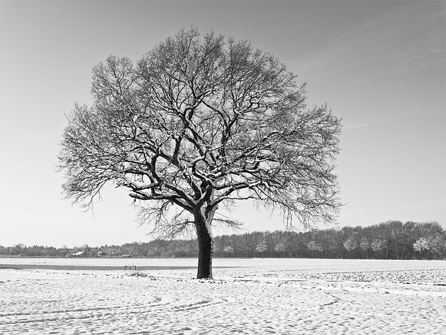 -11° Celsius - the tree