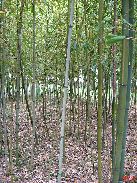 prendre un coup de bambou !