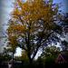 Autumn Trees Morning Sun Golden Hour