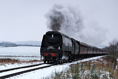 Pines Express