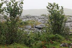 A peek at the Burren