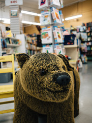 Bookstore Bear