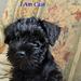 New pup @ 8 weeks