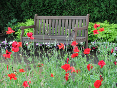 Sit Among the Poppies