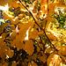 l'automne bat son plein