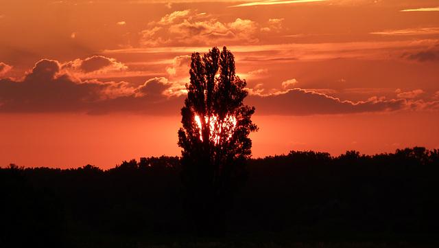 Abendliche Landschaft