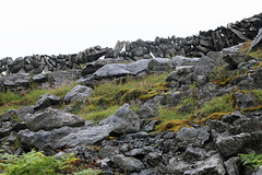 Fences in the Burren 1