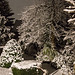 20150131 6749VRAw [D~RI] Schnee, Rinteln