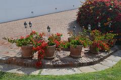 Lima, Larco Museum, Flower Pots in Lower Courtyard