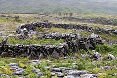 Fences in the Burren 2 (Explored)