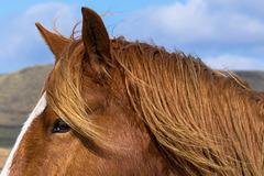 Through a horse's eye