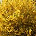 Gelbe Flowerpower