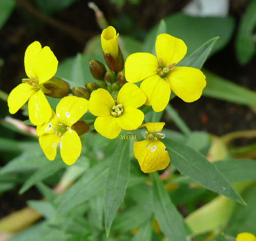 Petites fleurs...