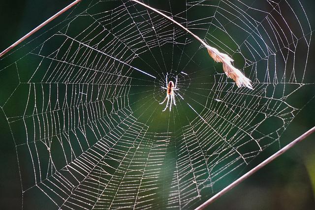 Jetzt beginnt die Zeit der Spinnen - Now begins the time of the spiders