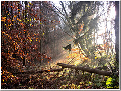 Ray of light in the late autumn forest