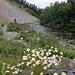 Fleurs sauvages sur route déserte