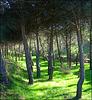 Early summer greenery near Valdemorillo, Madrid Province