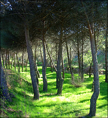 Early summer greenery near Valdemorillo, Madrid Province