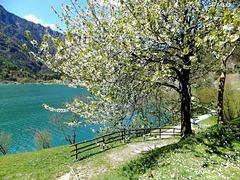 Frühling am Lago di Ledro. ©UdoSm
