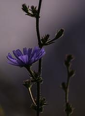Una flor sencilla
