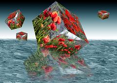 Cubos de amapolas en el mar