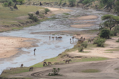 Tarangire River - Water for Animals