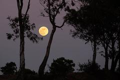 New Year, Full Moon rising, Pereiro (Algarve)