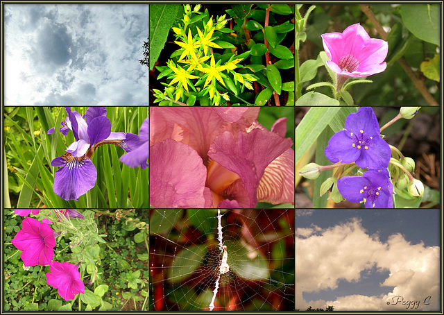Shapes / Colors of Nature ..