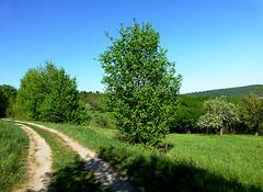 Zwischen Golfplatz und Lohrsdorf