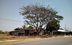 Arbres et maisons (Laos)