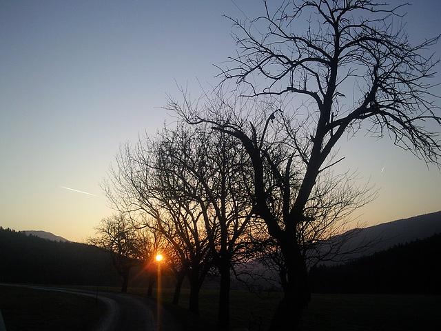 1 (28)..austria loweraustria eichberg..sundown with trees