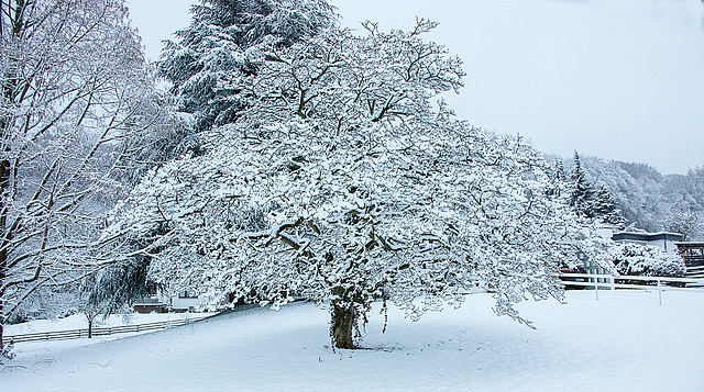 20150131 6751VRAw [D~SHG] Schnee, Rinteln