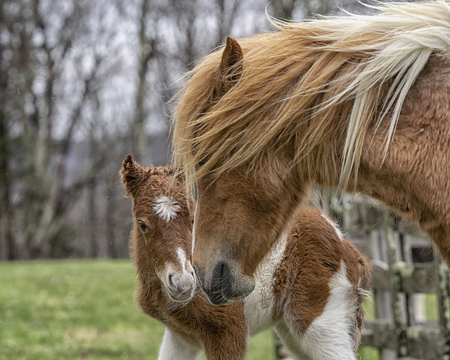 Magic and her new foal