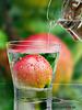 Apple juice anyone?