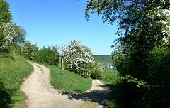 Spaziergang bei Lohrsdorf