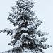 20150131 6762VRAw [D~SHG] Schnee, Rinteln