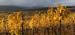 les couleurs de l'Alsace, le soir...